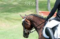 Valinor Riders #41 - #58  USEA Horse Trials