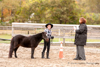 4H Horse Show @ Holloway Brook